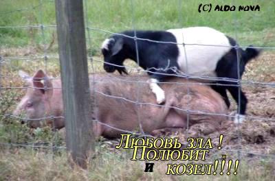 Животные ебутся