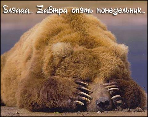 Медведь в трауре