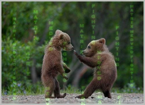 Medved Matrix